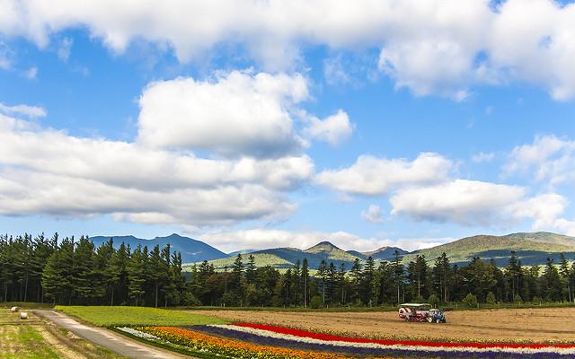 flower-site